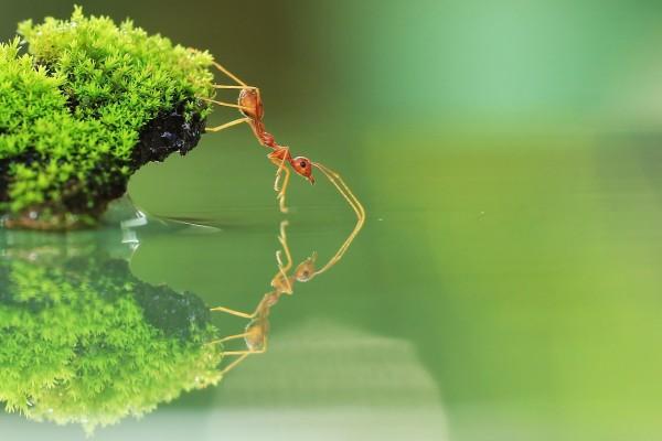 Una hormiga en equilibrio