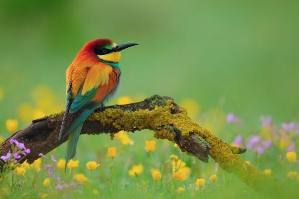 Pájaro multicolor posado en una rama