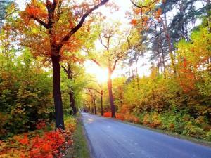 Carretera entre árboles y plantas en otoño