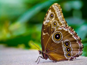 Mariposa posada en el suelo