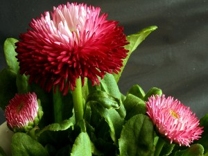 Tres bonitas flores