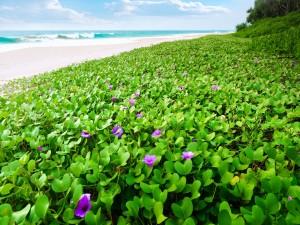 Plantas verdes con flores cerca de la playa