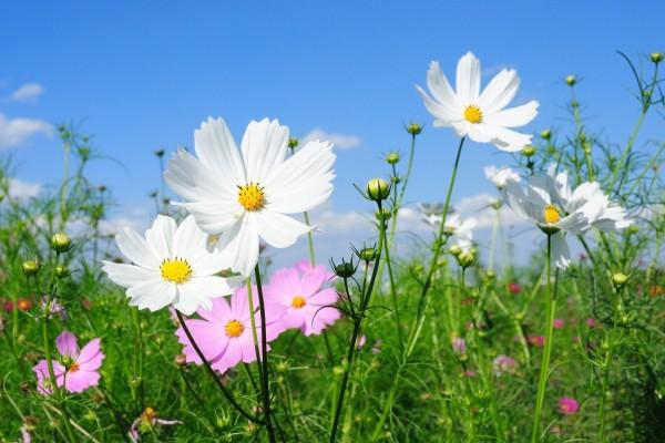 Bonitas flores silvestres blancas y rosas