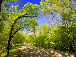 Postal: Los árboles dan sombra en el camino