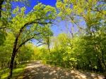 Los árboles dan sombra en el camino