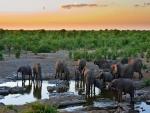 Elefantes tomando agua