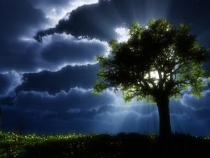 Postal: El árbol tapa a la luna