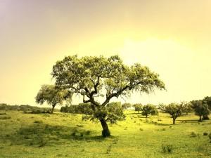 Árboles en la pradera