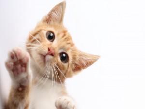 Postal: Gatito tocando la pantalla
