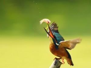 Postal: Pájaro con un pez en el pico