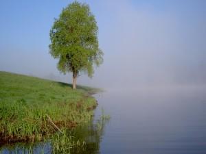 Postal: Árbol a la orilla del agua