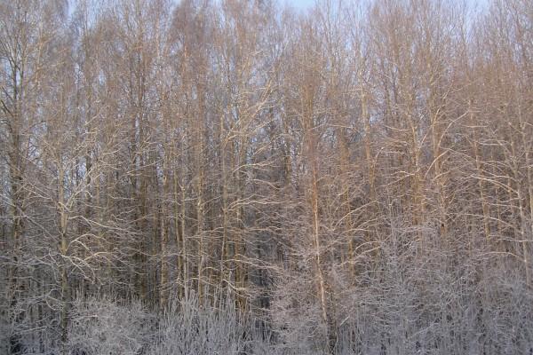 Árboles con ramas sin hojas