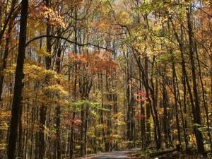 Llegada del otoño a la arboleda