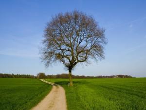 Postal: Un árbol en el camino