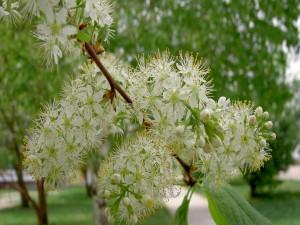 Postal: Conjunto de flores en la rama de un árbol