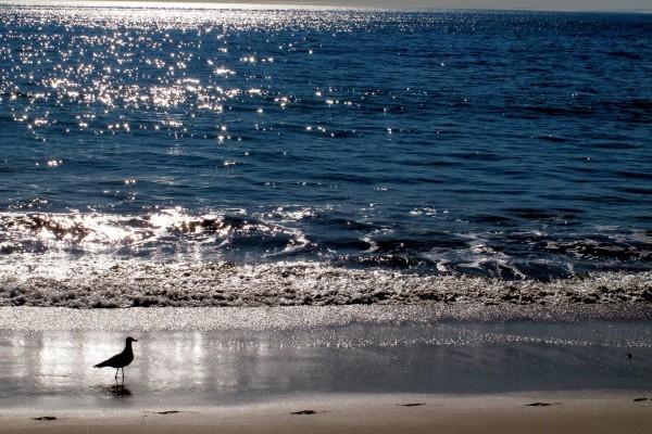 Pájaro caminando en la playa al amanecer
