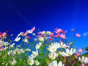 Campo con flores rosas y blancas