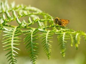 Mariposa posada en una planta