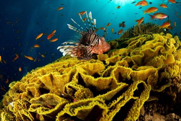Pez león y otros peces en el fondo del mar