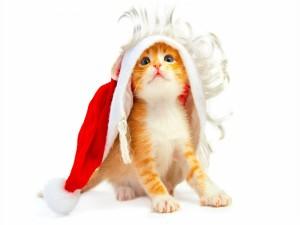 Postal: Gatito con peluca y gorro de Santa Claus