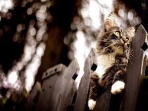 Gato subido en una valla de madera
