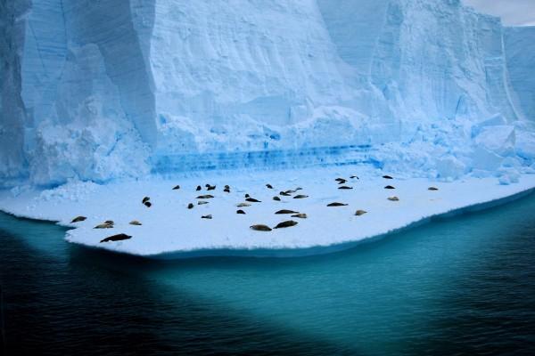 Viviendo en el hielo