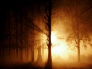 Postal: Un bosque lleno de misterio
