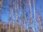Árboles bajo un cielo azul