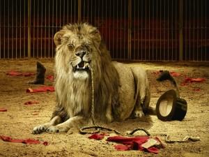 Postal: El león se comió al domador