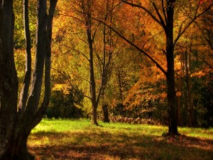 Hierba verde entre los árboles otoñales