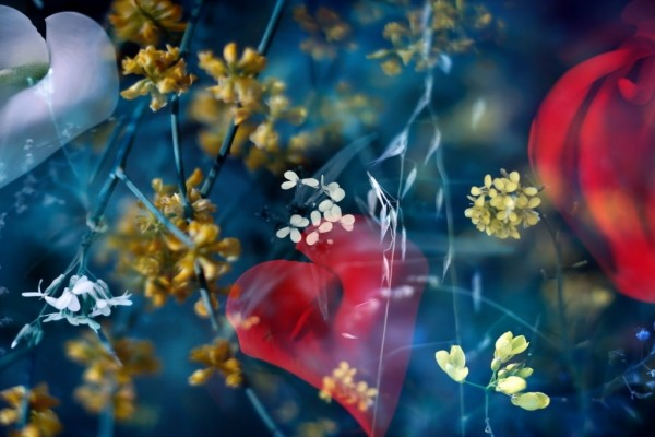 Papel tapiz de flores