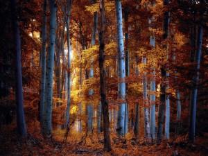 Rayo de luz penetrando en el bosque