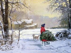 Muchacho lleva a casa el árbol para Navidad