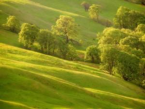 Árboles sobre hierba verde