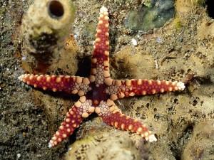 Estrella de mar en tierra seca
