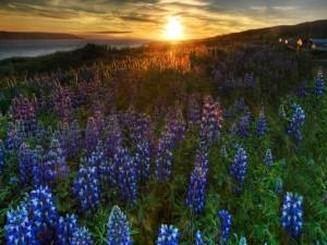 Postal: Flores en el campo al atardecer