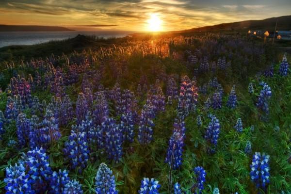 Flores en el campo al atardecer
