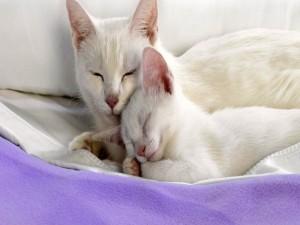 Gata blanca con su gatito