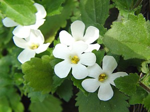 Postal: Flores blancas en la planta