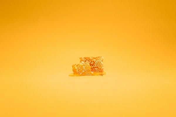 Panales de miel