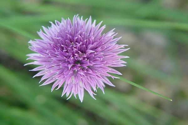 Flor con forma redonda