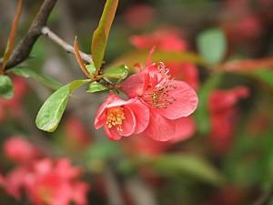Flores en la rama