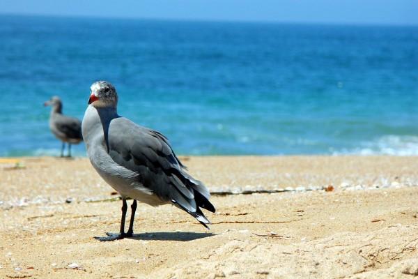 Aves en la playa