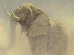 Postal: Elefante viejo