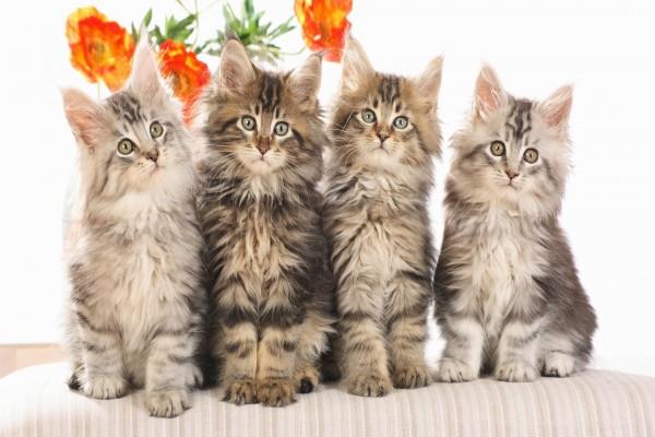Cuatro preciosos gatitos