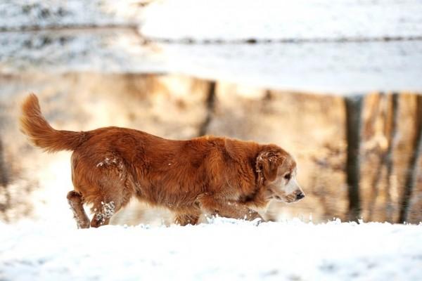 Perro caminando sobre la nieve