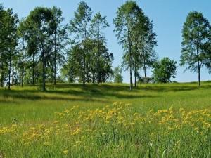 Postal: Plantas silvestres junto a árboles verdes