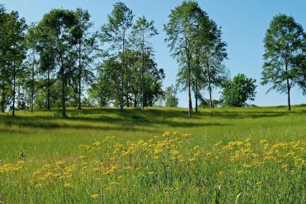 Plantas silvestres junto a árboles verdes