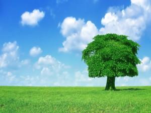 Postal: Cielo azul en un campo verde