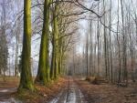 Camino entre árboles sin hojas